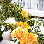 Skyros apartments bougainvillea
